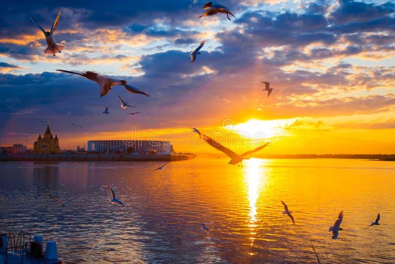 Zonsondergang in de stad Zonsondergang op de rivier Zeemeeuwenvlieg over de rivier royalty-vrije stock afbeelding