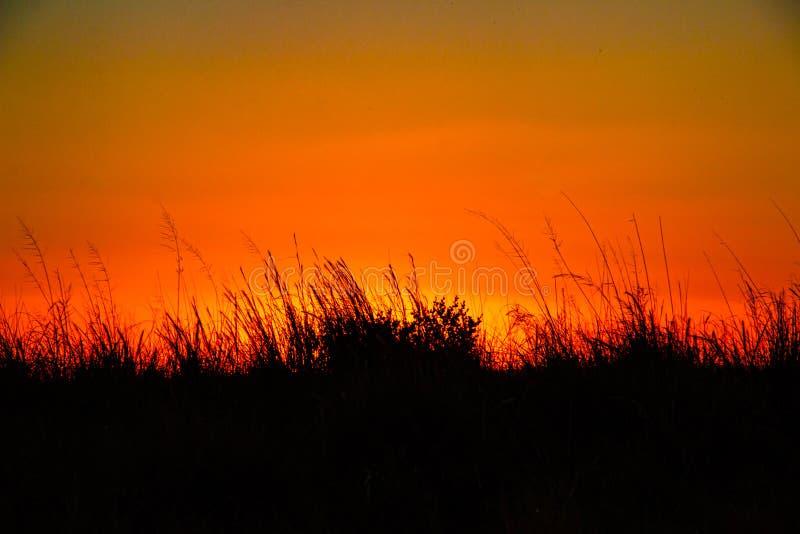 Zonsondergang in de weide stock afbeelding