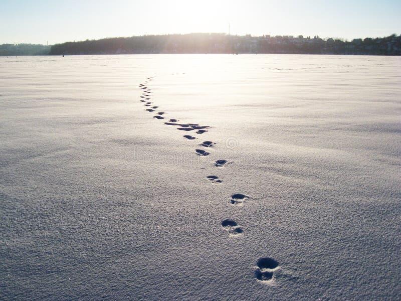 Zonsondergang in de winter Voetafdrukken van mensen op het sneeuwgebied Aan het eind van het gebied, kunt u het bos zien royalty-vrije stock afbeelding
