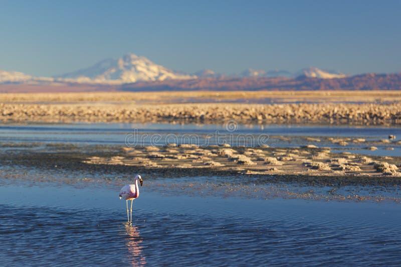 Zonsondergang in de Woestijn Atacama royalty-vrije stock afbeeldingen