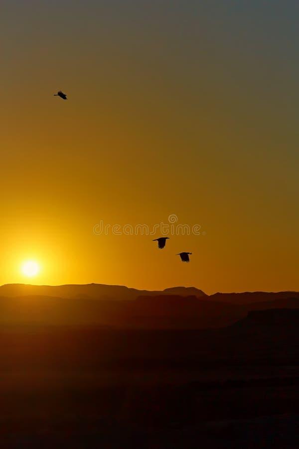 Zonsondergang in de Woestijn van de Sahara Silhouetten van kraaien tegen de bedelaars royalty-vrije stock foto