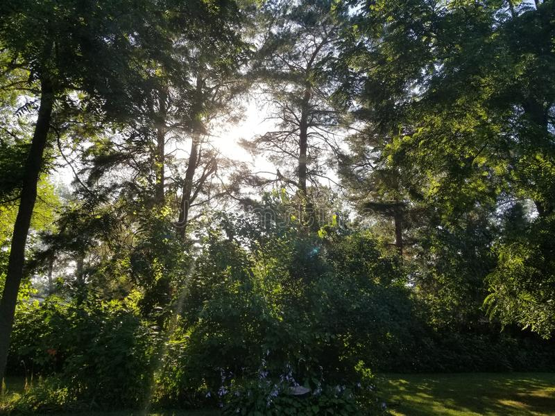 Zonsondergang door de bomen royalty-vrije stock afbeeldingen