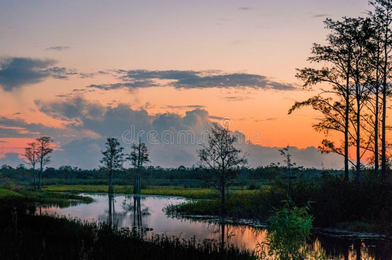 Zonsondergang door de bomen van de moerassen stock afbeelding