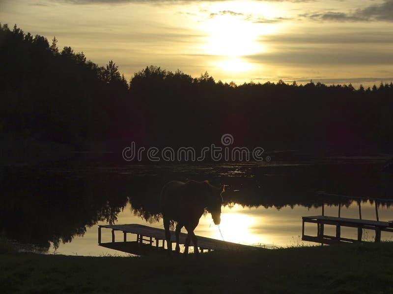Zonsondergang door het bosmeer royalty-vrije stock afbeelding