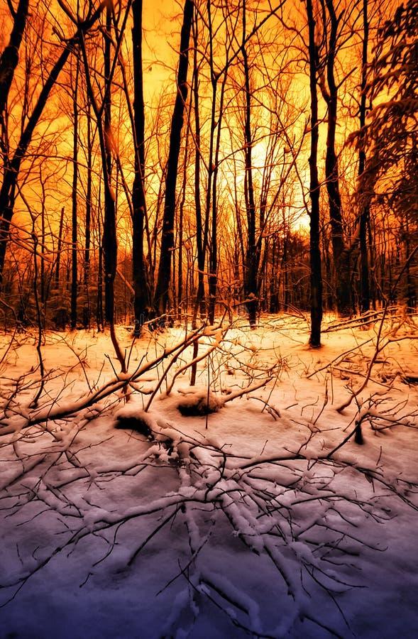 Zonsondergang in een de winterbos royalty-vrije stock afbeelding