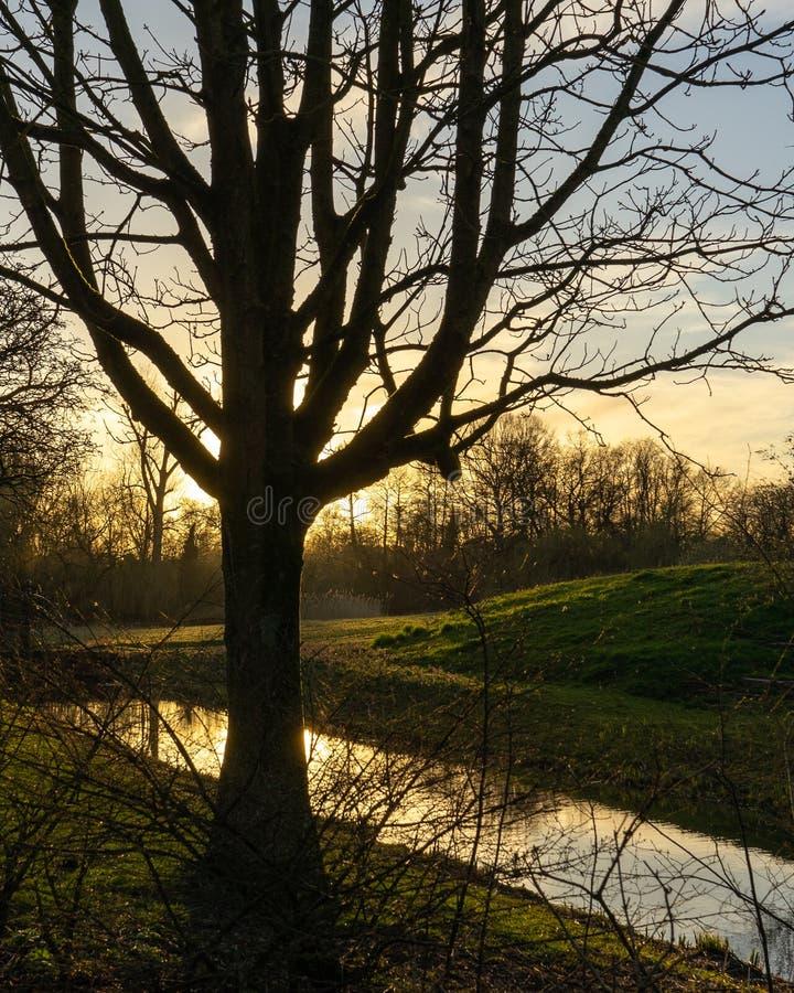 Zonsondergang in een Park in Amsterdam op een koude de winterdag stock foto's