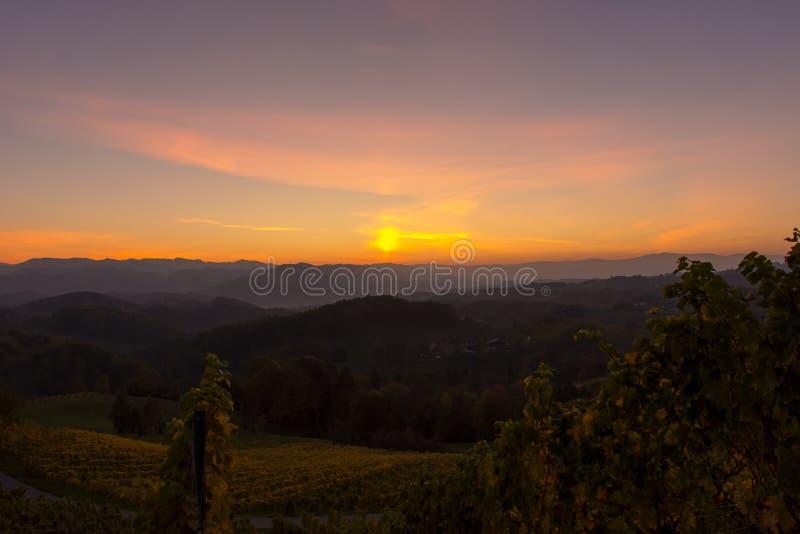 Zonsondergang in een wijngaard royalty-vrije stock fotografie