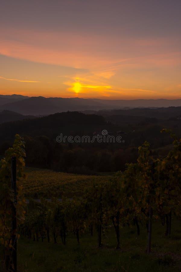 Zonsondergang in een wijngaard stock fotografie