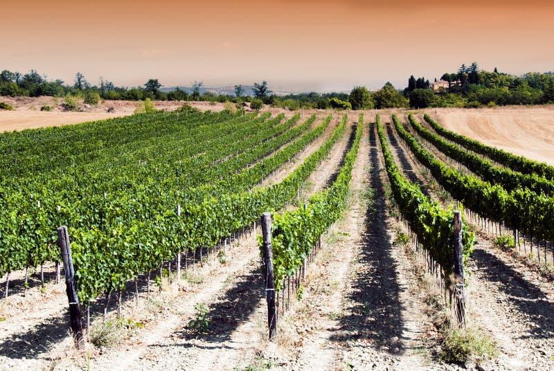 Zonsondergang in een wijngaard