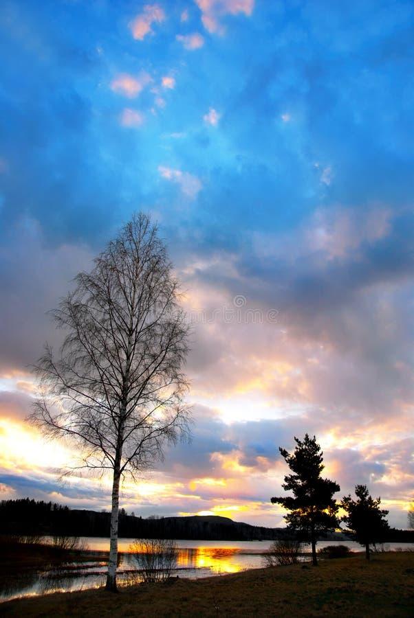 Zonsondergang en berkboom stock fotografie