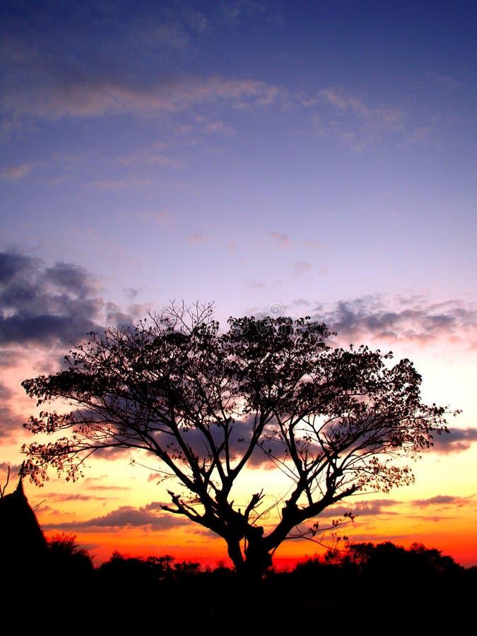 Zonsondergang en boom 02 stock afbeelding