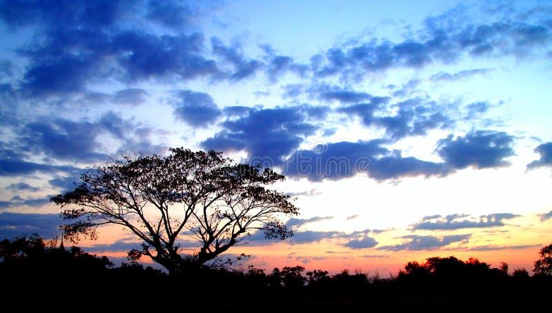 Zonsondergang en boom 03 stock afbeelding