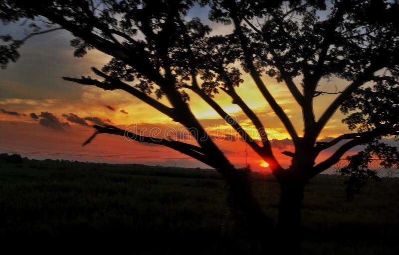 Zonsondergang en boom stock fotografie