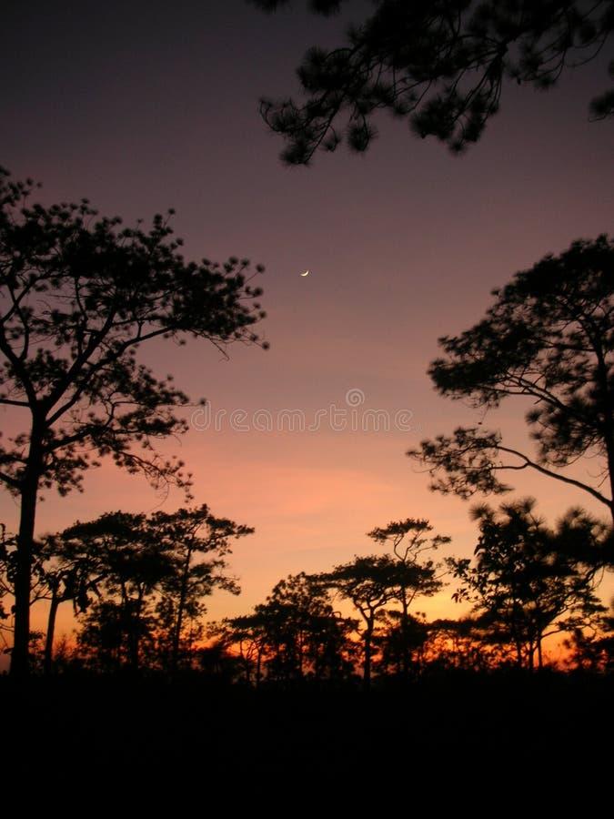 Zonsondergang en de scène van boomsillhuette royalty-vrije stock fotografie