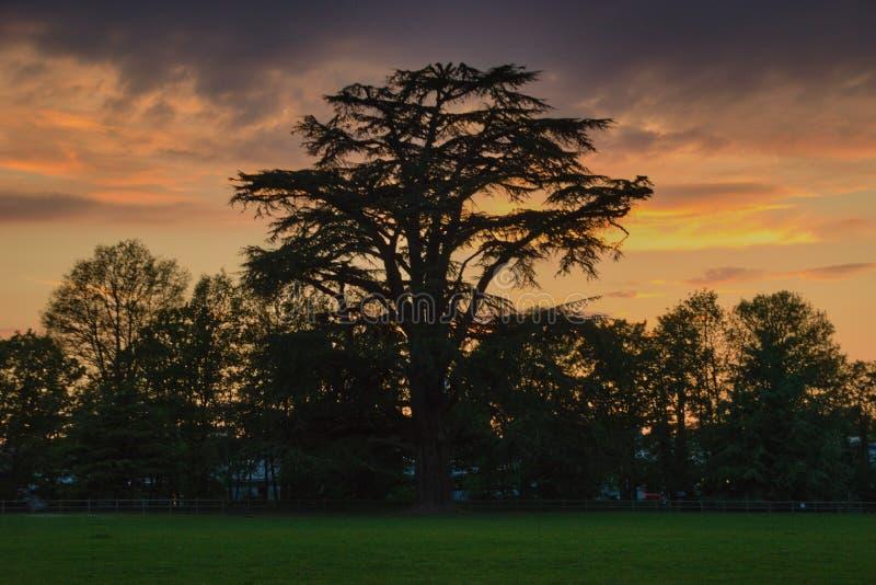 Zonsondergang en een boom royalty-vrije stock afbeeldingen