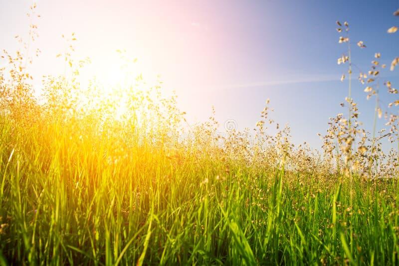 Zonsondergang en gras stock afbeeldingen