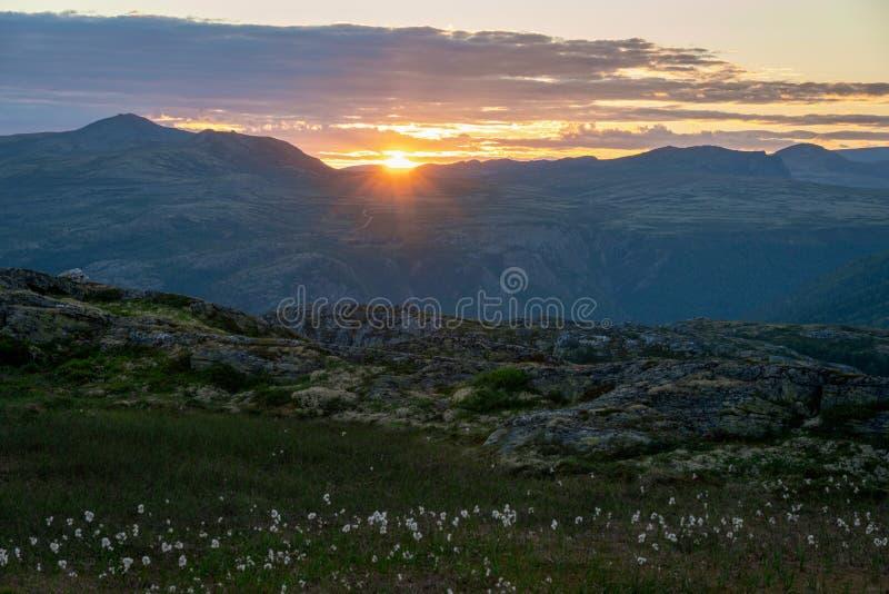 Zonsondergang en katoenen bloemen in de beautofil toneel levendige Noorse bergen stock fotografie