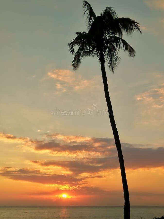 Zonsondergang en kokospalm royalty-vrije stock foto's