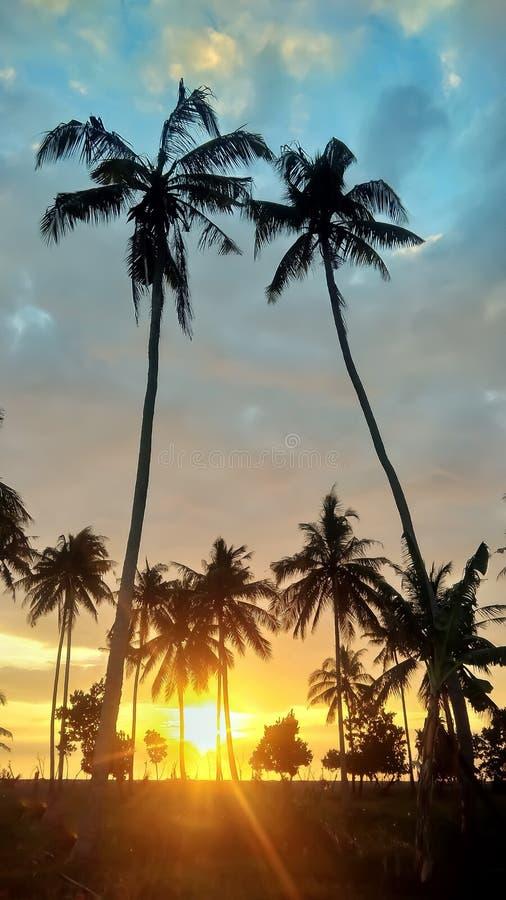 Zonsondergang en kokospalm royalty-vrije stock afbeelding