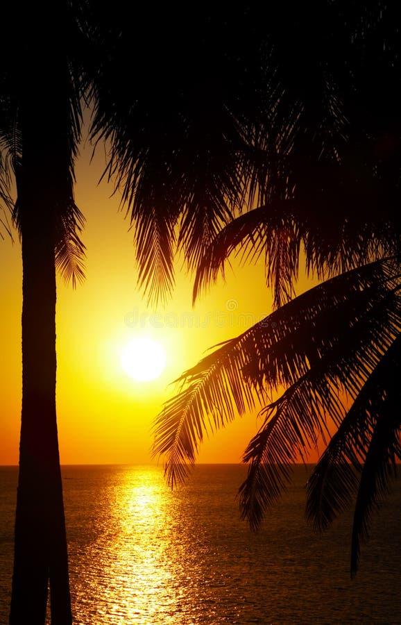 Zonsondergang en palmen royalty-vrije stock foto's