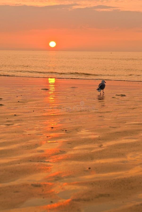 Zonsondergang en strand royalty-vrije stock afbeelding