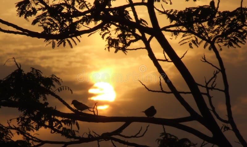 Zonsondergang en vogels in Bahrein royalty-vrije stock afbeelding