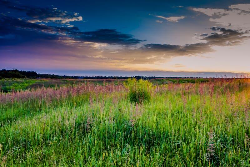 Zonsondergang in het gras in een weide royalty-vrije stock afbeeldingen