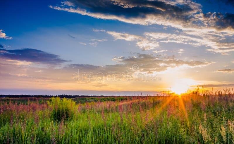 Zonsondergang in het gras in een weide stock afbeeldingen