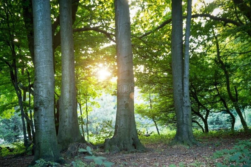 Zonsondergang in het Hout stock afbeeldingen
