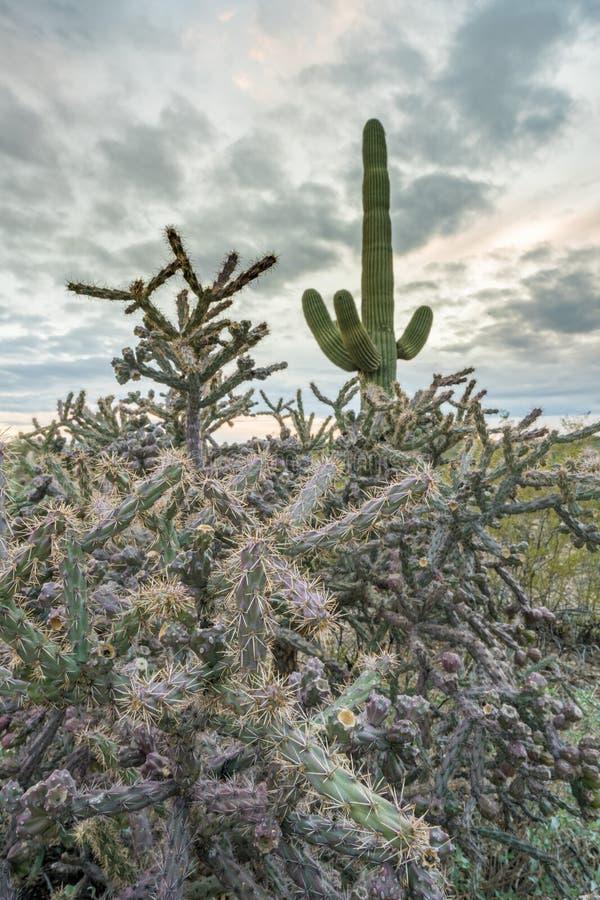 Zonsondergang in het Nationale Park Tucson van Saguaro royalty-vrije stock afbeeldingen