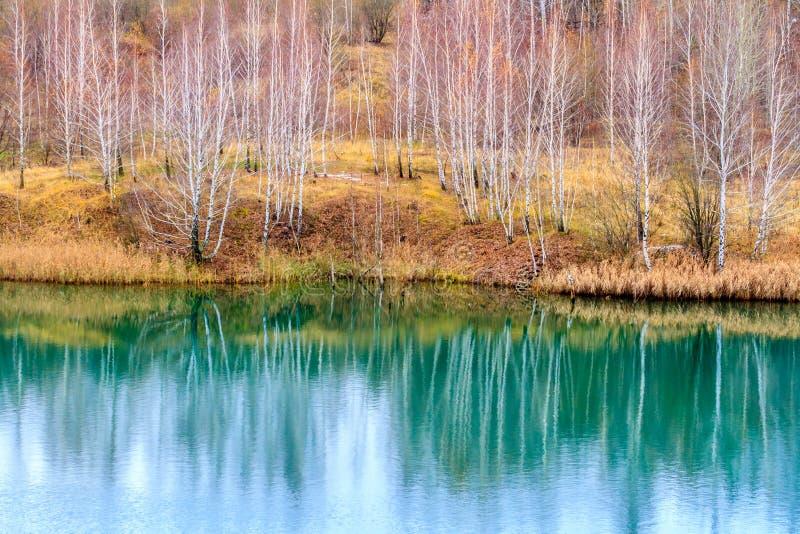Zonsondergang in het Park Bezinning van het naakte bos van de de herfstberk in water van kalm meer royalty-vrije stock foto's
