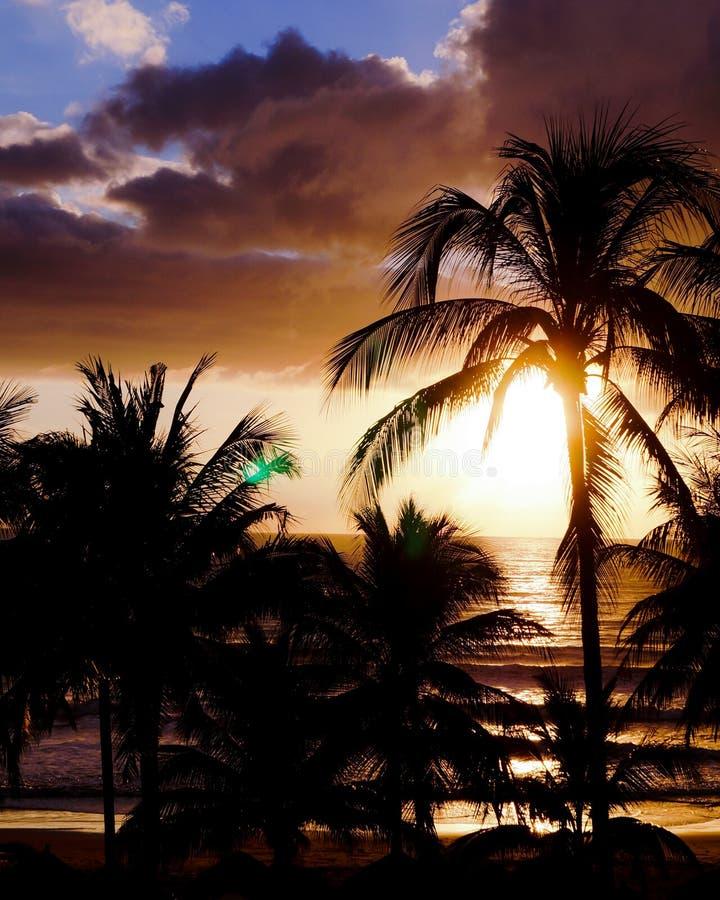 Zonsondergang in het strand met palmen royalty-vrije stock afbeelding