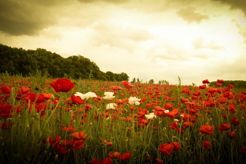 Zonsondergang in horizon die gebied van wilde bloemen behandelen stock foto