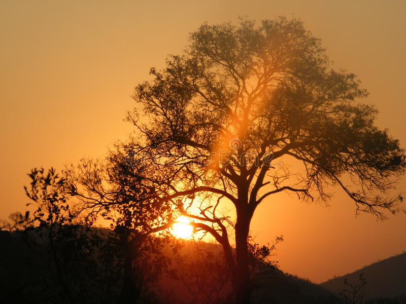 Zonsondergang in krugerpark stock afbeelding