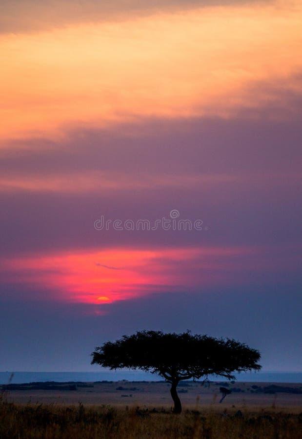 Zonsondergang in Maasai Mara National Park afrika kenia stock foto's