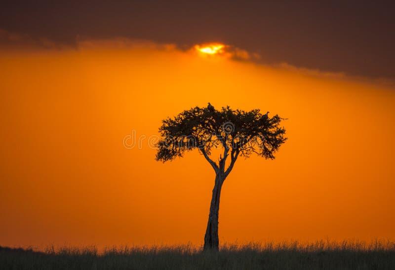 Zonsondergang in Maasai Mara National Park afrika kenia royalty-vrije stock afbeelding
