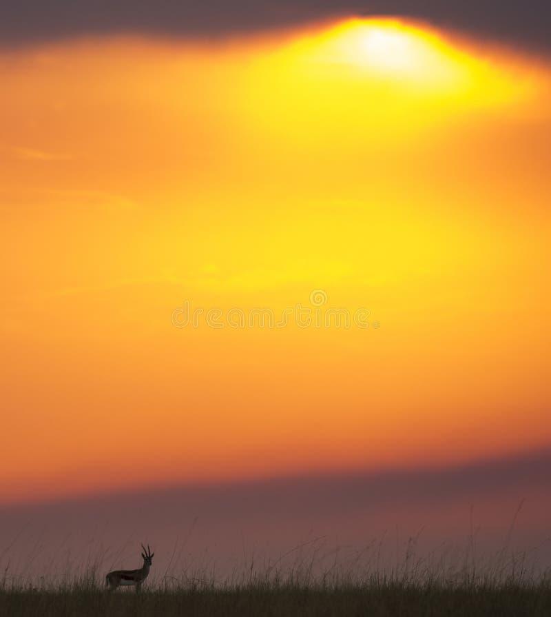Zonsondergang in Maasai Mara National Park afrika kenia royalty-vrije stock foto's