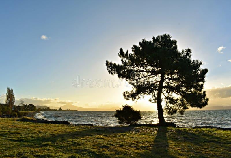 Zonsondergang in meer Taupo stock afbeeldingen