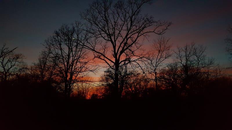 Zonsondergang met bomen stock afbeelding