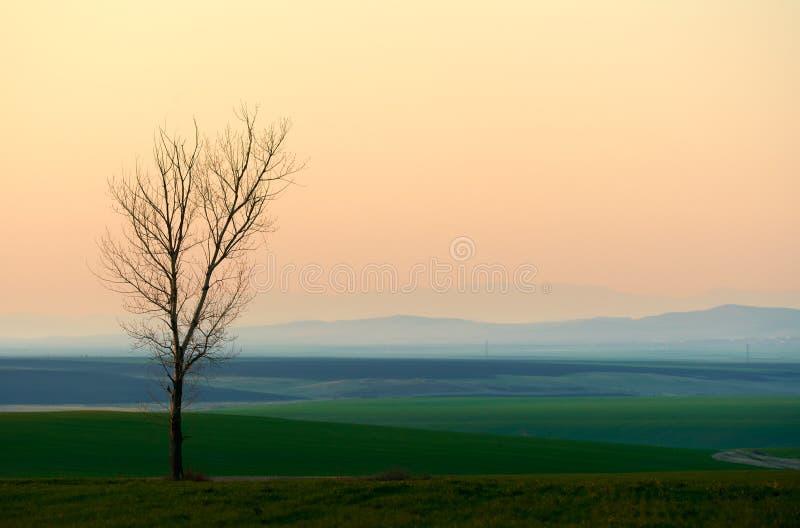 Zonsondergang met eenzame boom stock fotografie