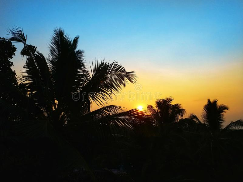 Zonsondergang met kokospalmen stock foto's