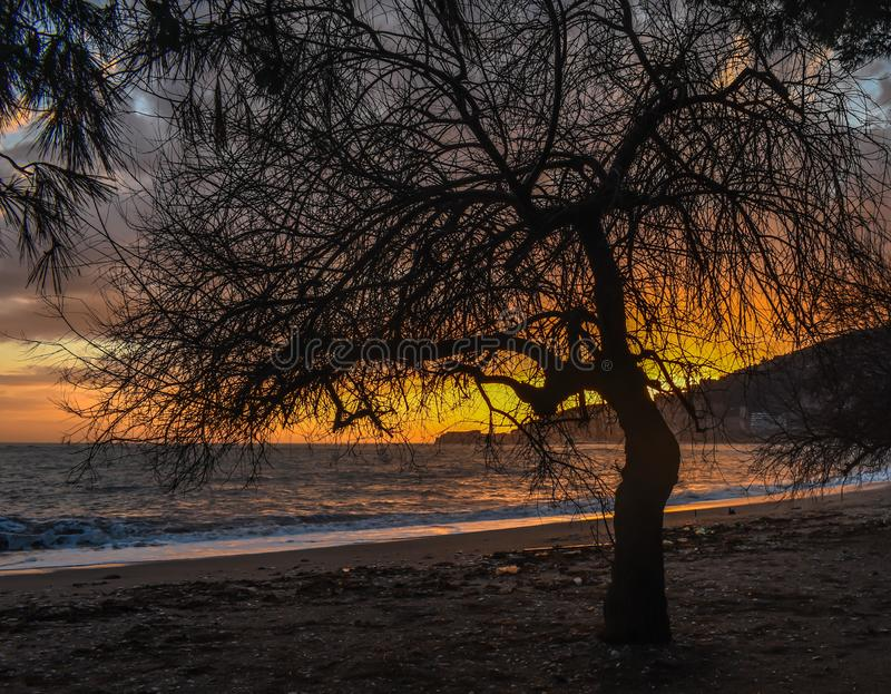 Zonsondergang met overzees en boom royalty-vrije stock foto's