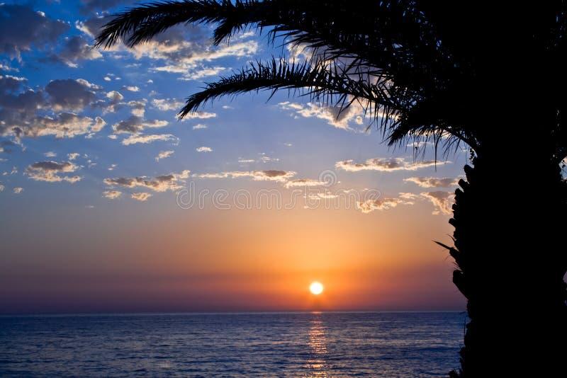 Zonsondergang met overzees en palm stock fotografie