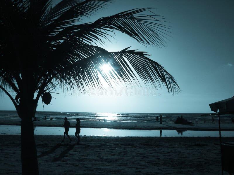 Zonsondergang met Palm royalty-vrije stock fotografie