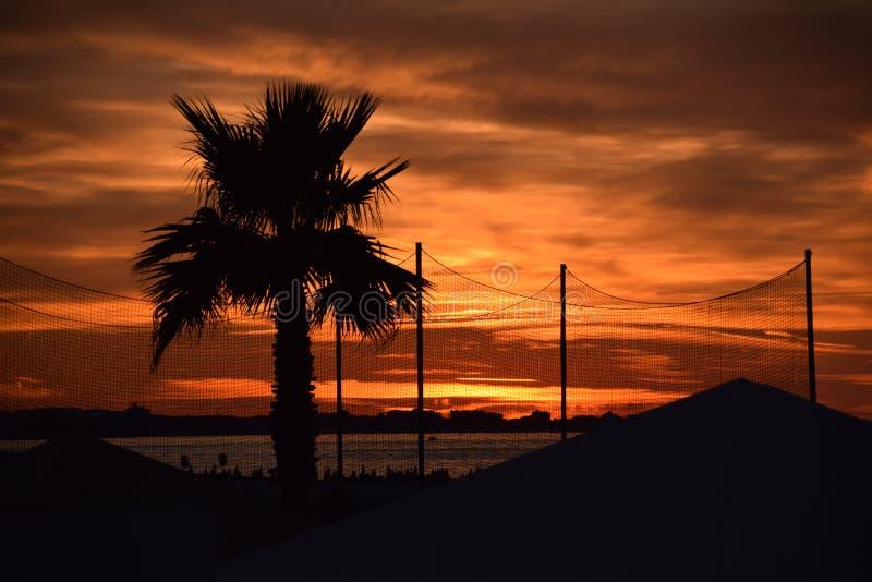 Zonsondergang met palm stock foto