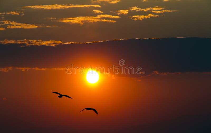 Zonsondergang met vogels stock afbeelding