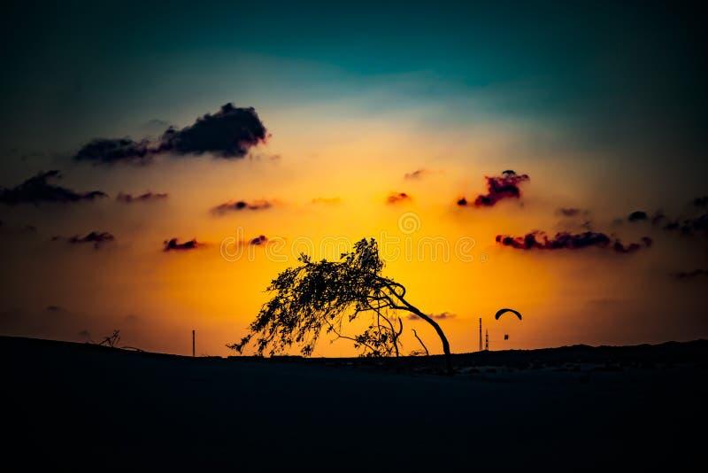 Zonsondergang met windswept boom in het natuurlijke deel in Corralejo, kanarie-Eilanden, Spanje royalty-vrije stock afbeelding