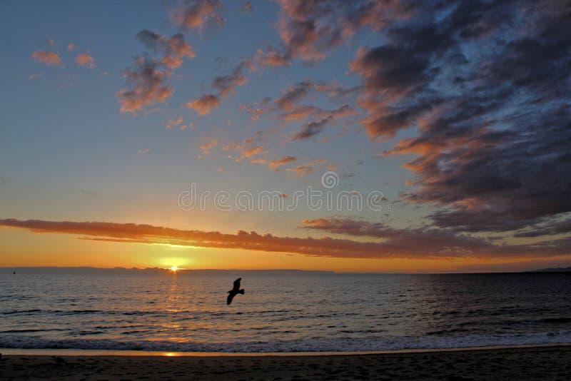 Zonsondergang met Zeemeeuw, Redondo-Strand, Los Angeles, Californië royalty-vrije stock afbeelding