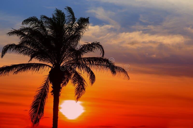 Zonsondergang mooi kleurrijk landschap in de blauwe tijd van de de aardschemering van de hemelavond en silhouetboom royalty-vrije stock afbeeldingen