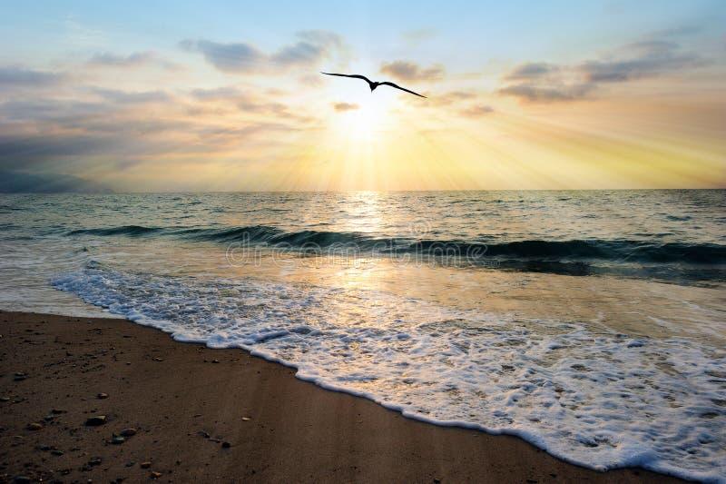 Zonsondergang Oceaanvogel royalty-vrije stock foto